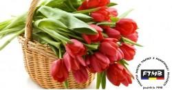 mesaje-de-8-martie-cele-mai-frumoase-urari-si-sms-uri-pe-care-le-puteti-trimite-femeilor-din-viata-dumnevoastra-18502168
